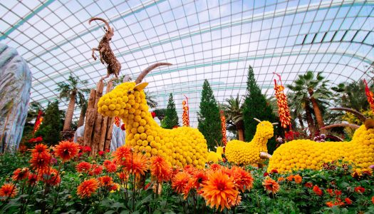 Explore The Beauty of Gardens By The Bay Singapore
